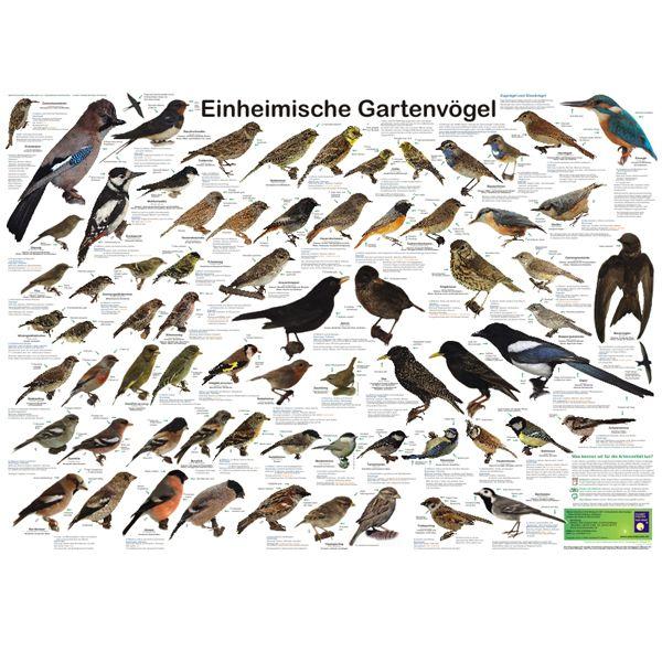 """Bio-Poster \""""Einheimische Gartenvögel\"""""""