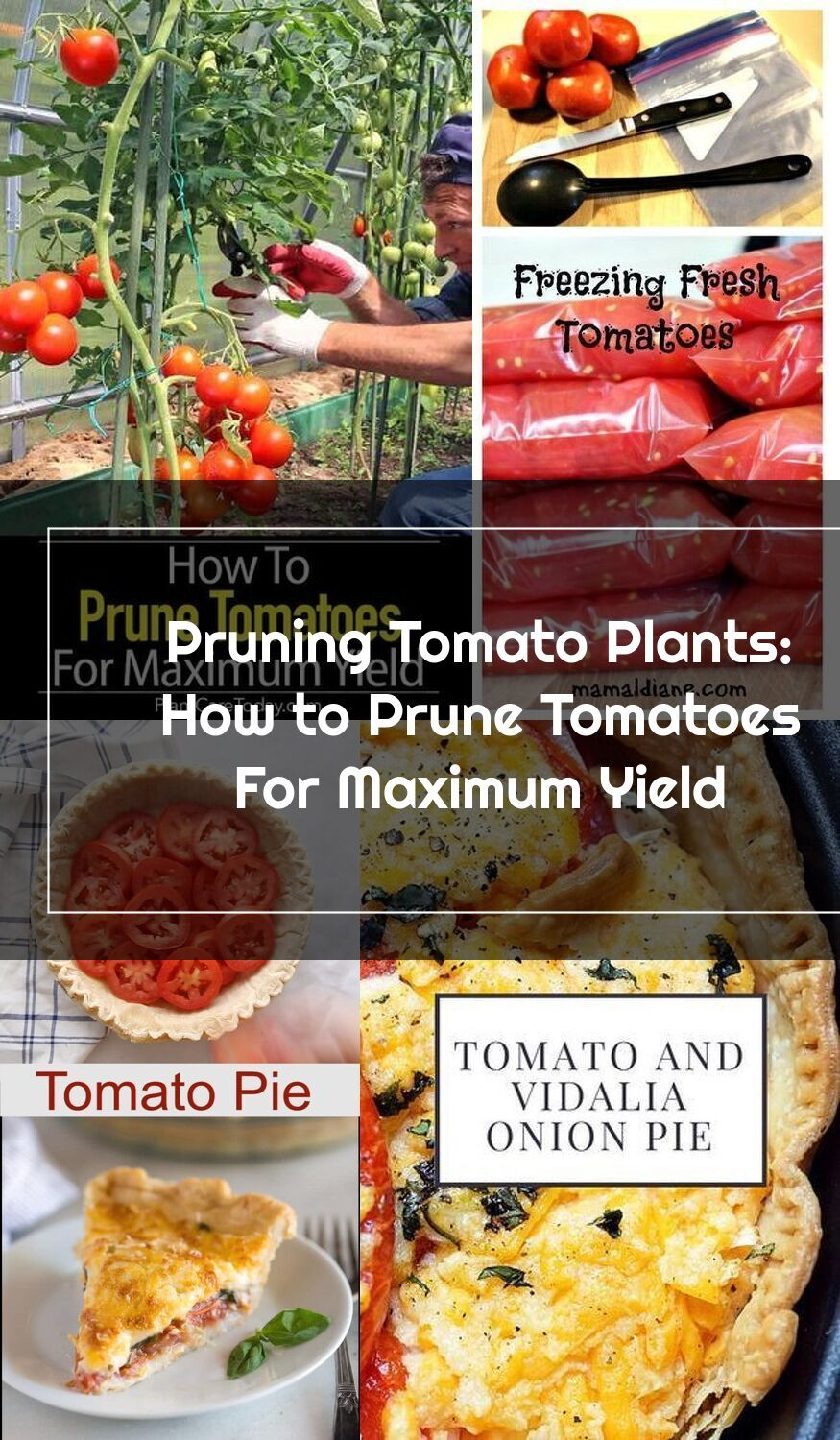 Did you know youll get more tomatoes with pruning learn