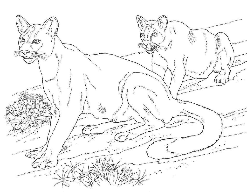 Coloring Pages Of Wetland Animals : Puma and cougar coloring pages printable