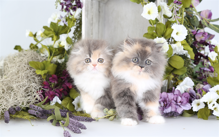 Download Wallpapers Persian Cats Small Fluffy Kittens Pets Gray Kittens 4k Besthqwallpapers Com Chaton Persan Chats Persans Animaux De Compagnie