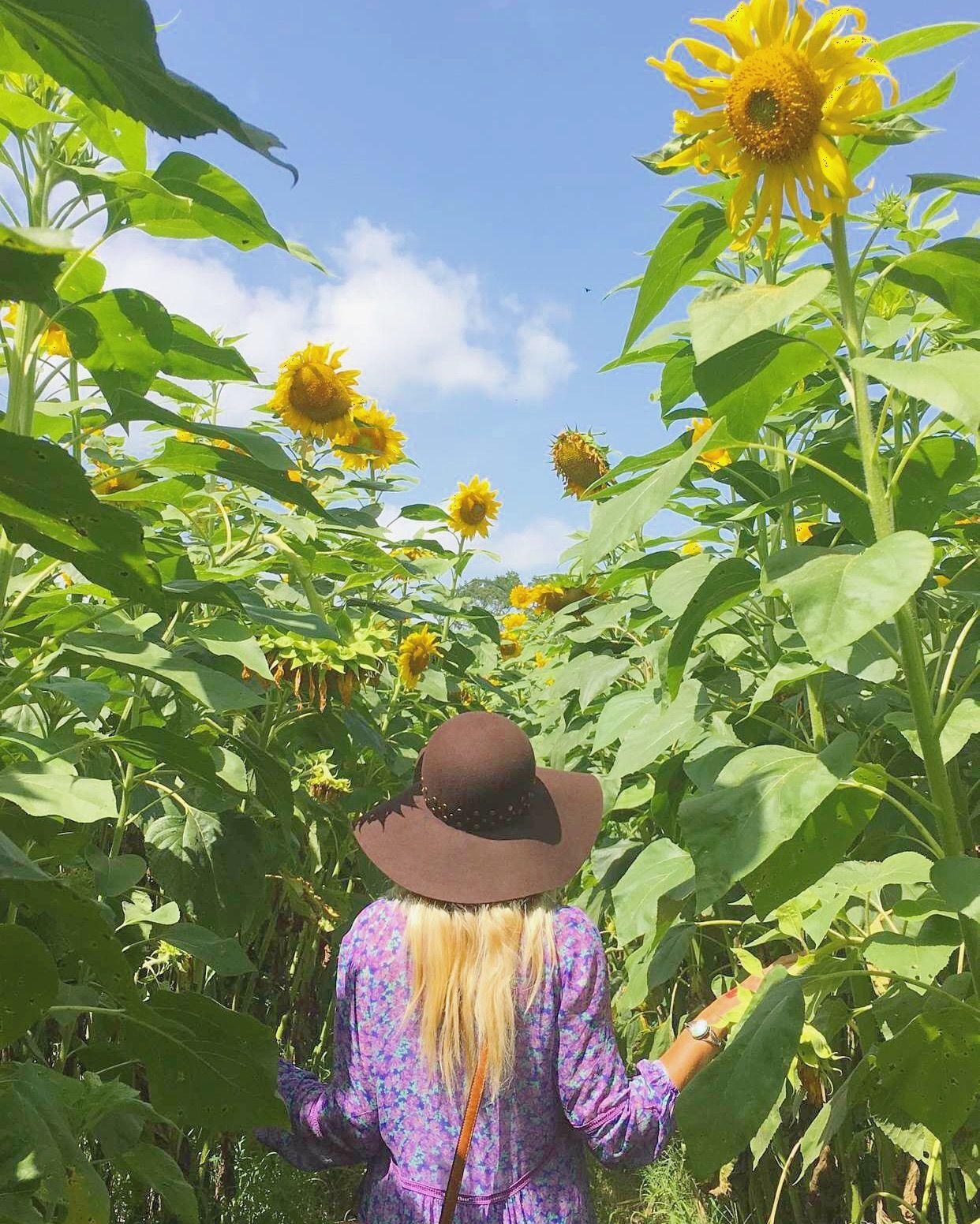 Farm Sweet Farm Sunflower