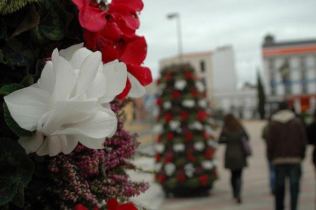 Decoración con flores para navidad en Badajoz. Más decoración en www.decoracion2.com