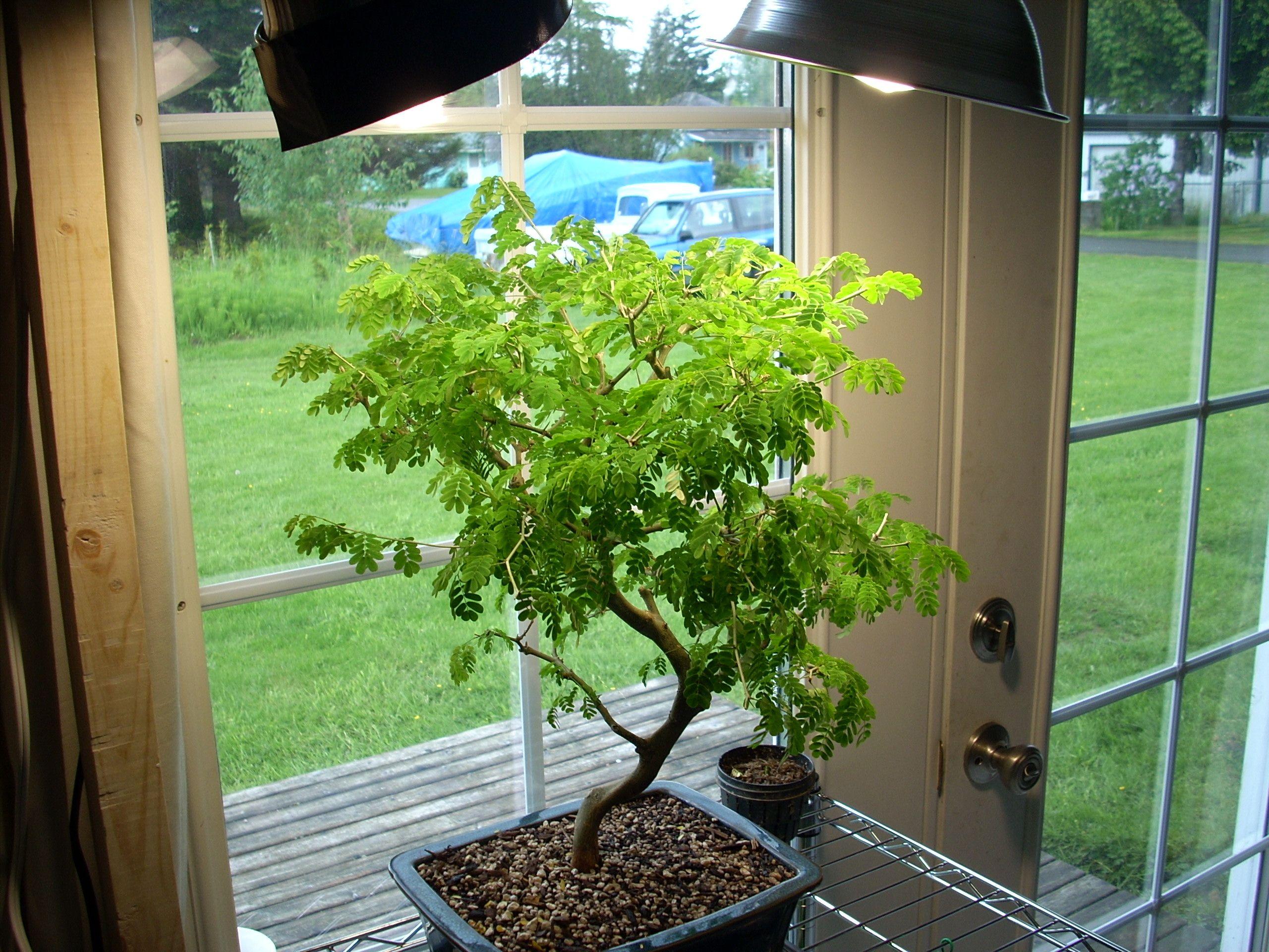 bztree.jpg (1024×768) Growing plants indoors, Indoor