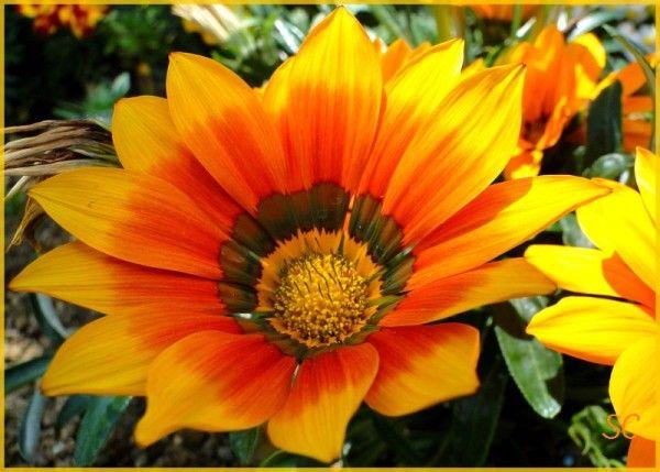 Résultats de recherche d\u0027images pour « Fleurs jaunes et oranges photos »