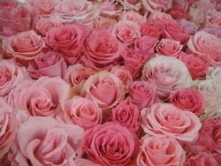 ah pretty roses
