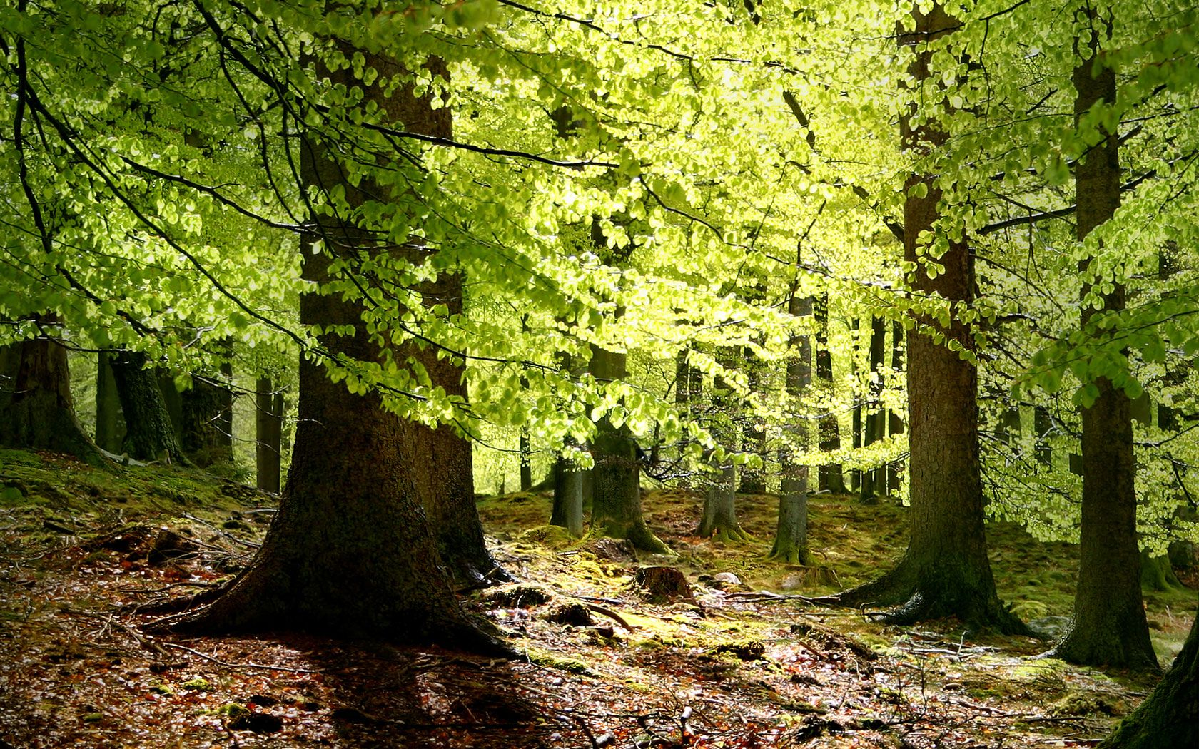 Denmark has beautiful forests perfect for trekking and exploring!