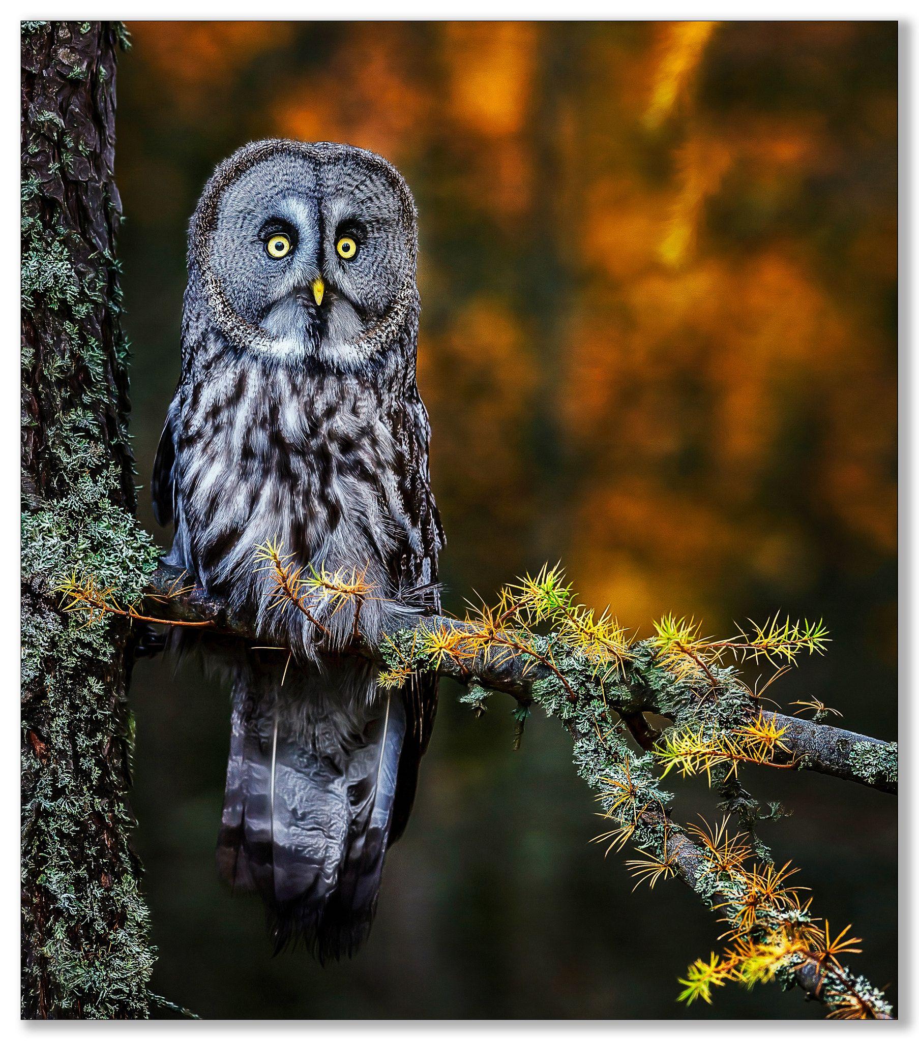 Startled. null Wildlife, Owl, Animals