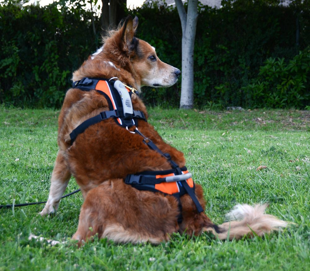 The Dog Geek Product Review Blue Dog Help Em Up Harness Dogs