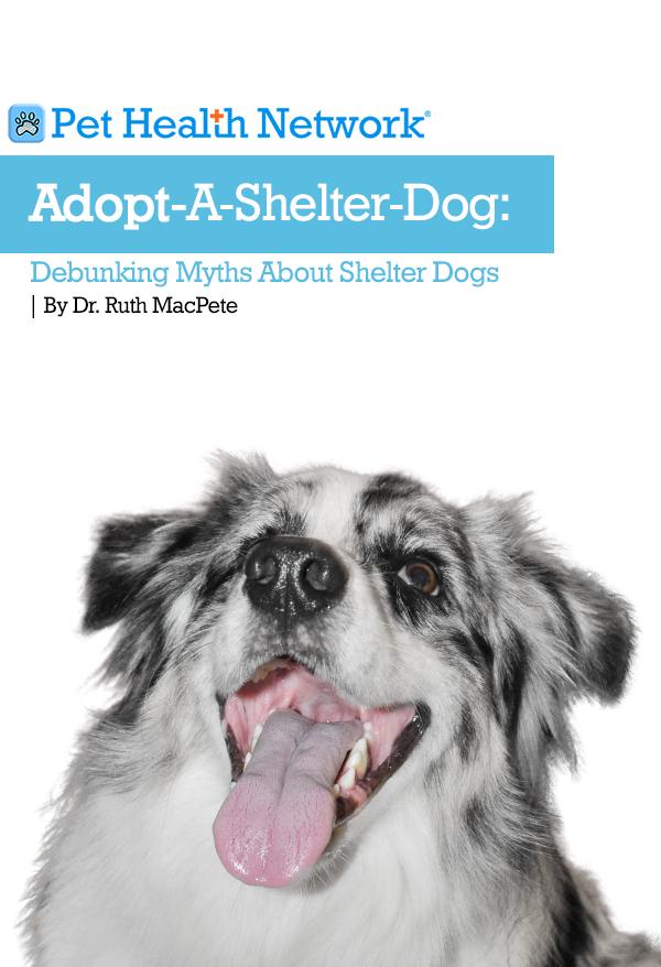 Adopt A Shelter Dog Debunking Myths About Shelter