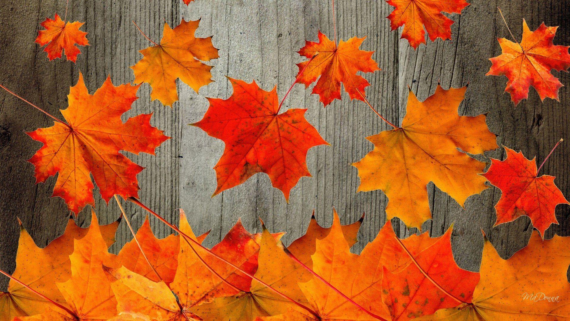 Free Fall Desktop Wallpaper Downloads 1280×1024 Fall Wallpapers ...