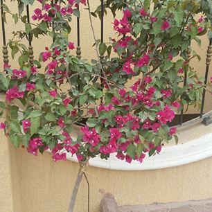 نبات متسلق Plants