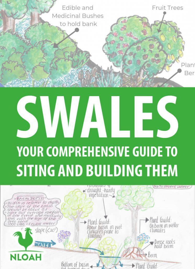 Everything you need to know about making swales in your permaculture garden to capture rainwater for your food forest