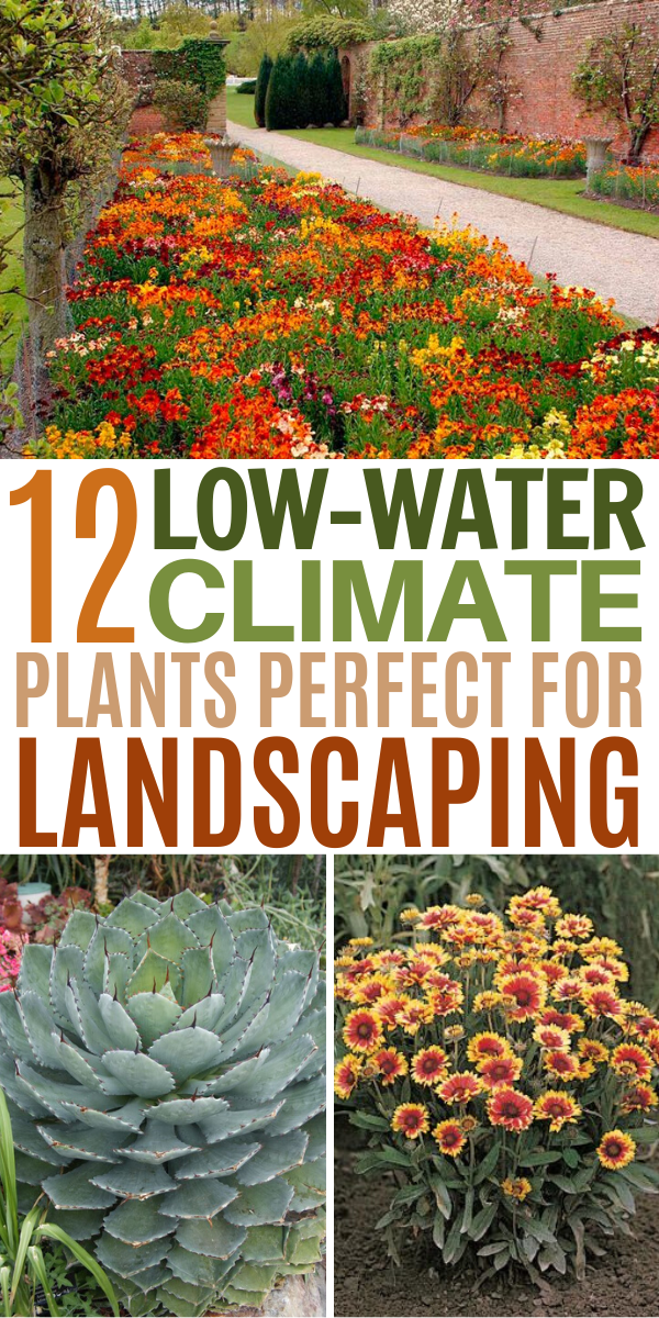 12 Drought Tolerant Flowers And Plants That Ll Add Color To Your Garden Drought Tolerant Landscape Plants Drought Tolerant