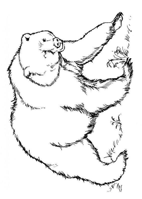 Disegno Di Orso Da Colorare 07 Orsi Disegni Orso