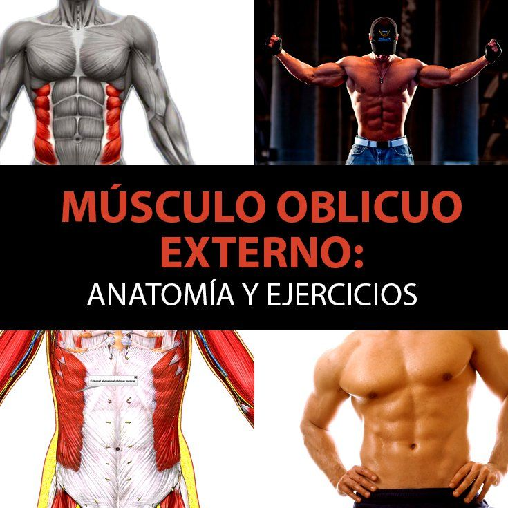 zsírvesztés anatómia