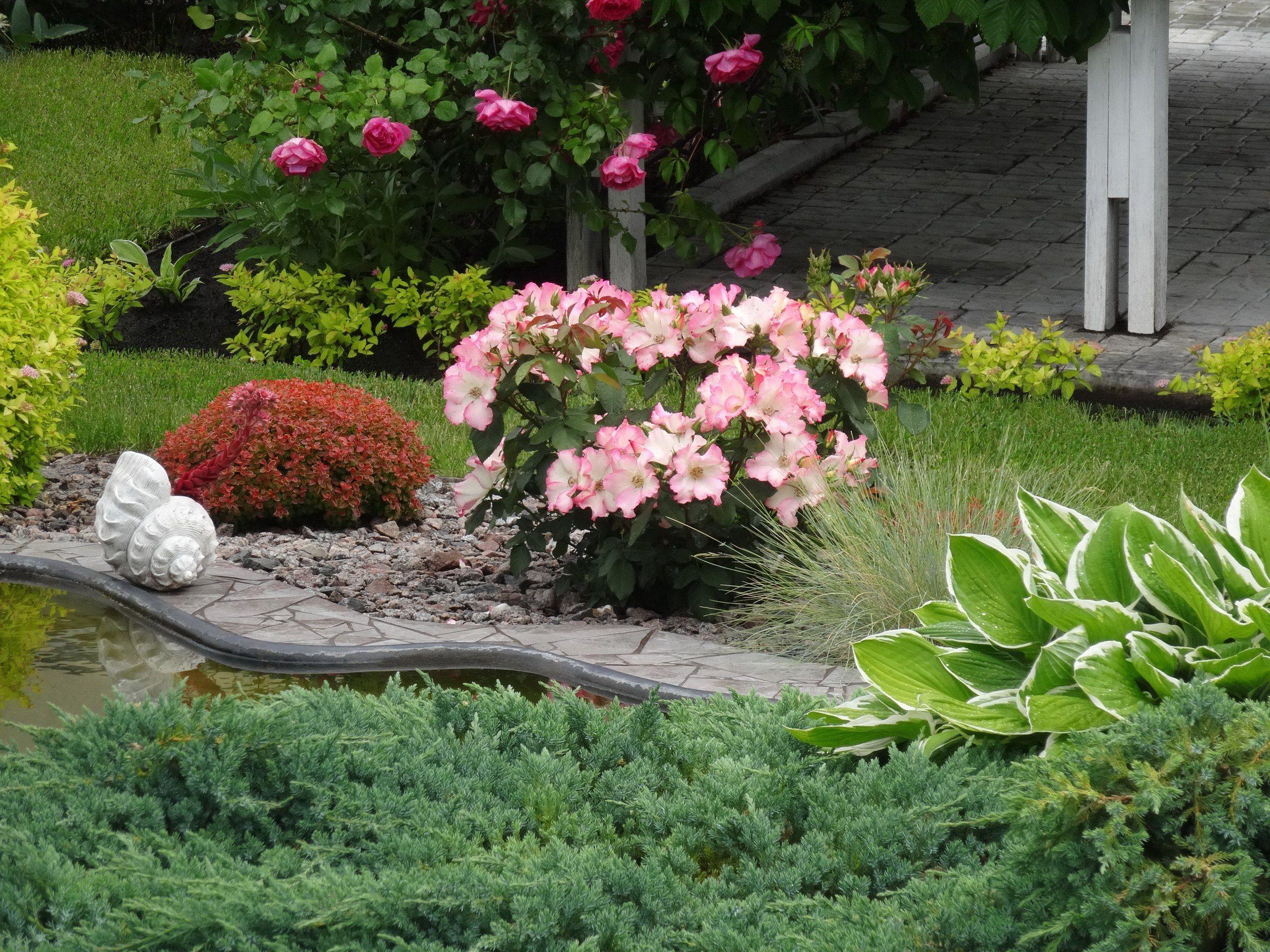 Ландшафтный дизайн с розами фото