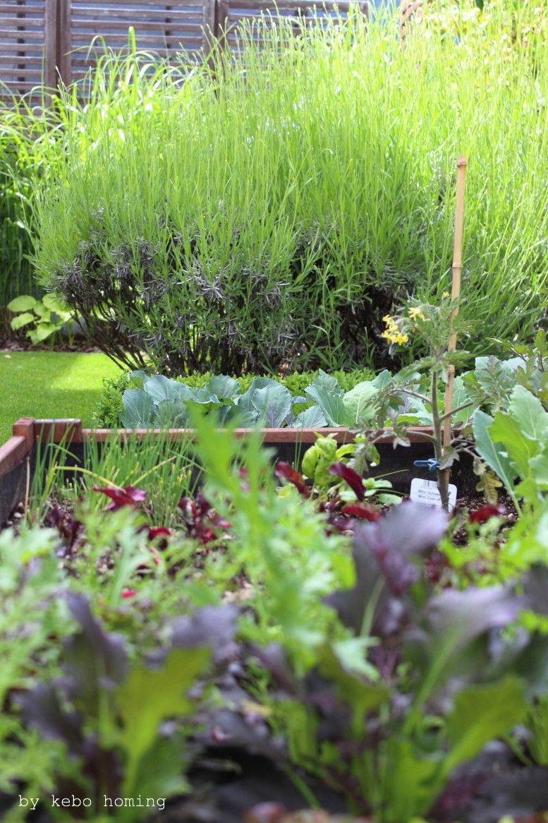 Ein Klar Strukturierter Minimalistischer Garten, Verschiedene Gräser,  Grüntöne, Lineare Beete, Clean, Minimal Styled Garden, Spring Time In The  Garden, ...