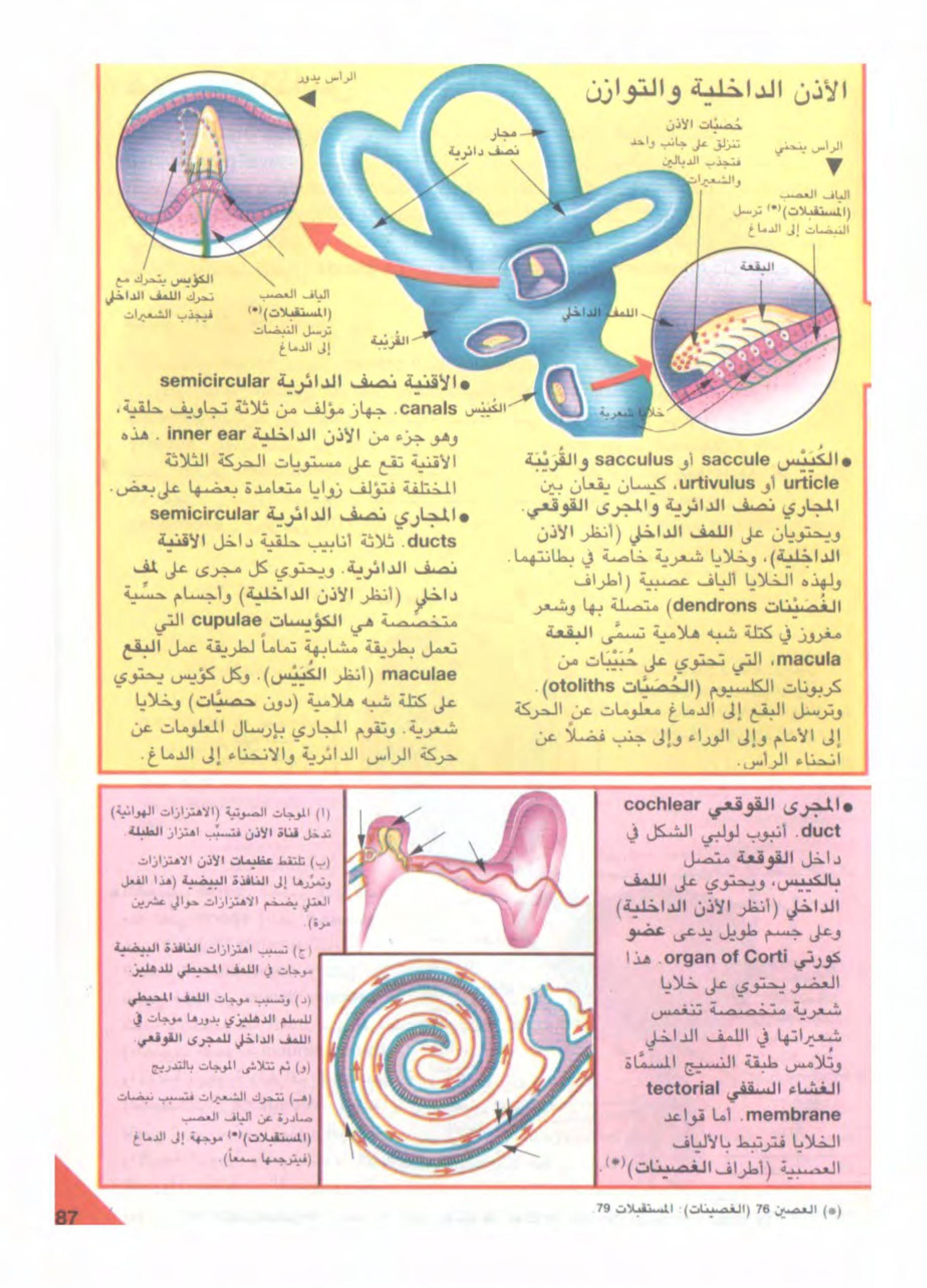 لن تصدق ماذا يحصل بعد وضع قطرات الزيت داخل الأذن Ear Infection Home Remedies Ear Infection Remedy Ear Wax