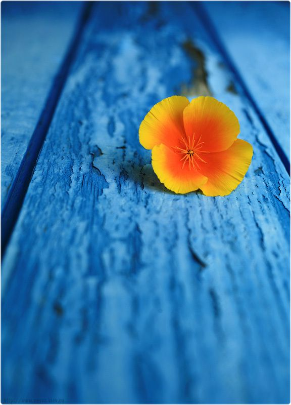 ~~On blue. ~ complimentary colors by Nessa G ...