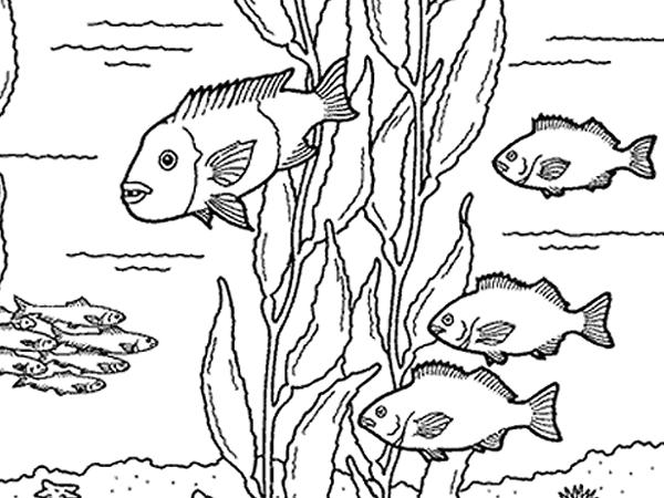 Kelp Forest Friends | kids | Pinterest