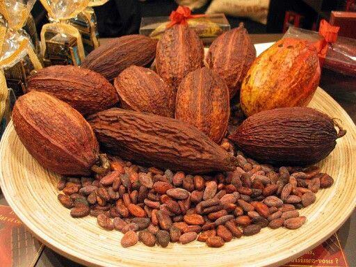 Presentación del cacao