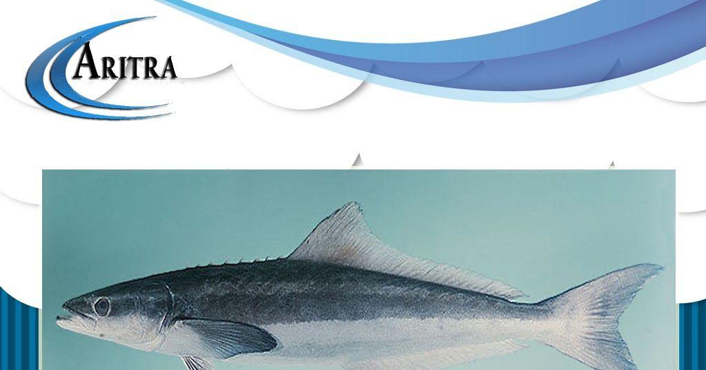 20 Gambar Kartun Ikan Gabus Di 2020 Kartun Gambar Ikan