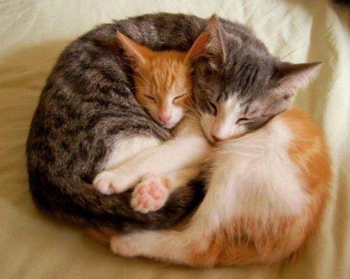 #cat #animales #mascotas #gatos #catofday #cute #love