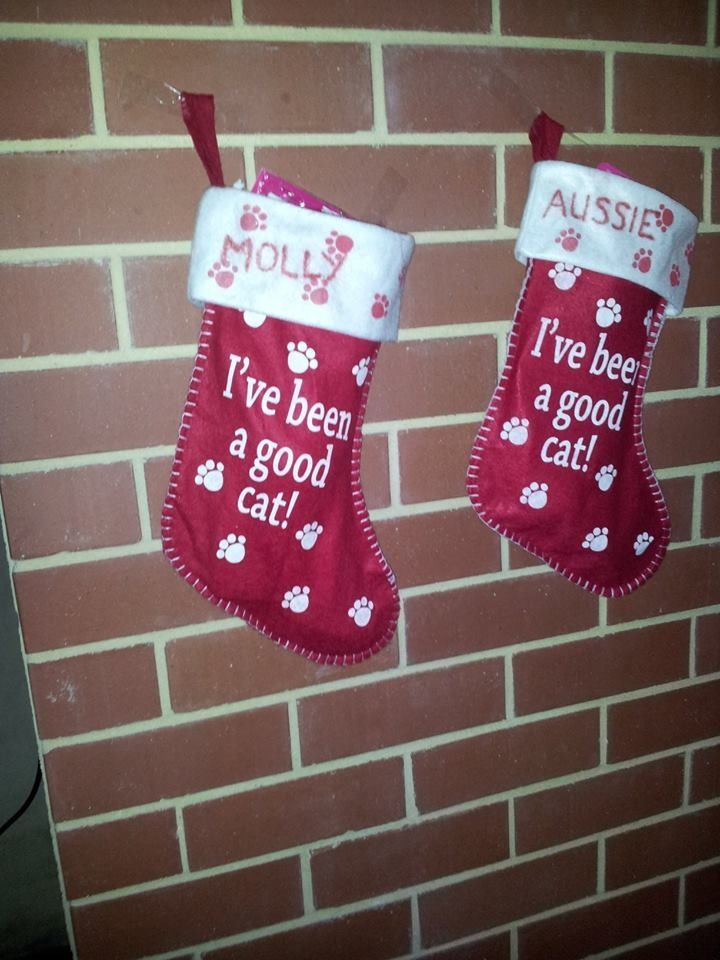 Kitty Christmas stockings