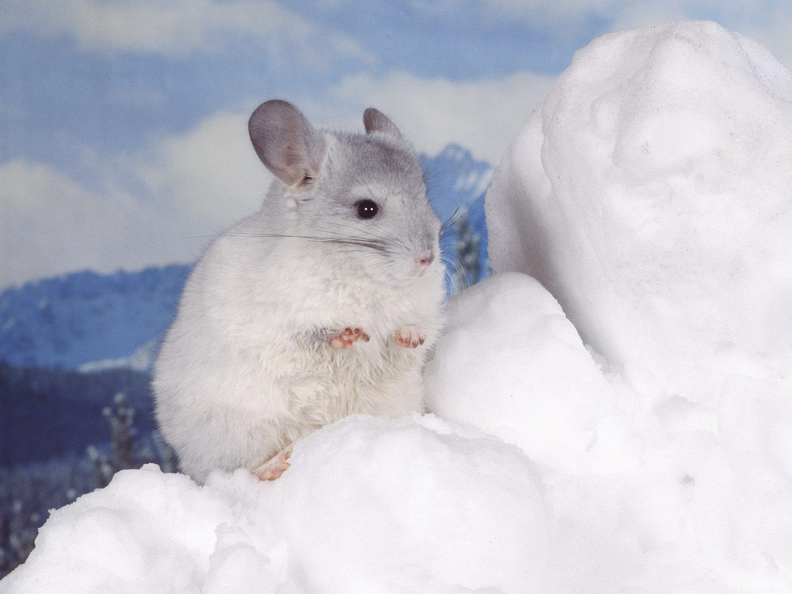 Resultado de imagen de postales de ratones en la nieve