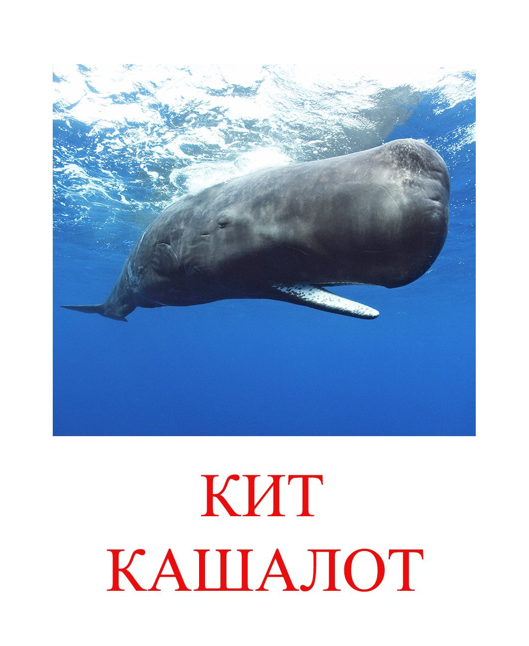Картинки морских обитателей с названиями для детей