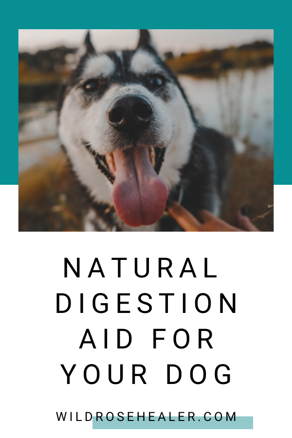 Easy Natural Digestion Aid For Your Dog In 2020 Healthy Pet Food Dog Health Your Dog