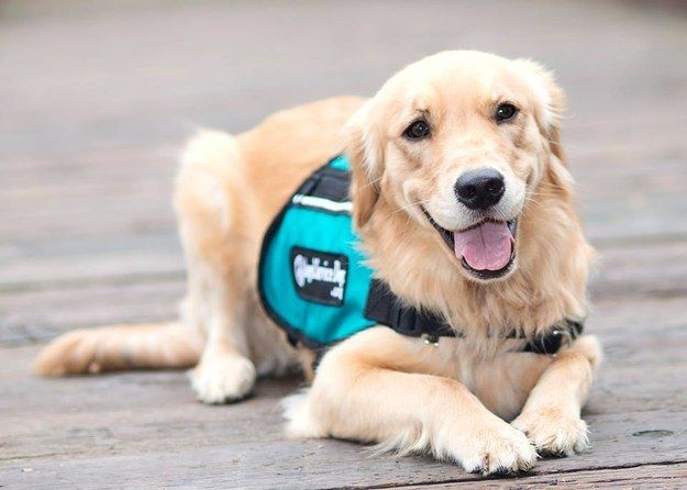 8 Types Of Service Dogs We Should Be Grateful For Psychiatric