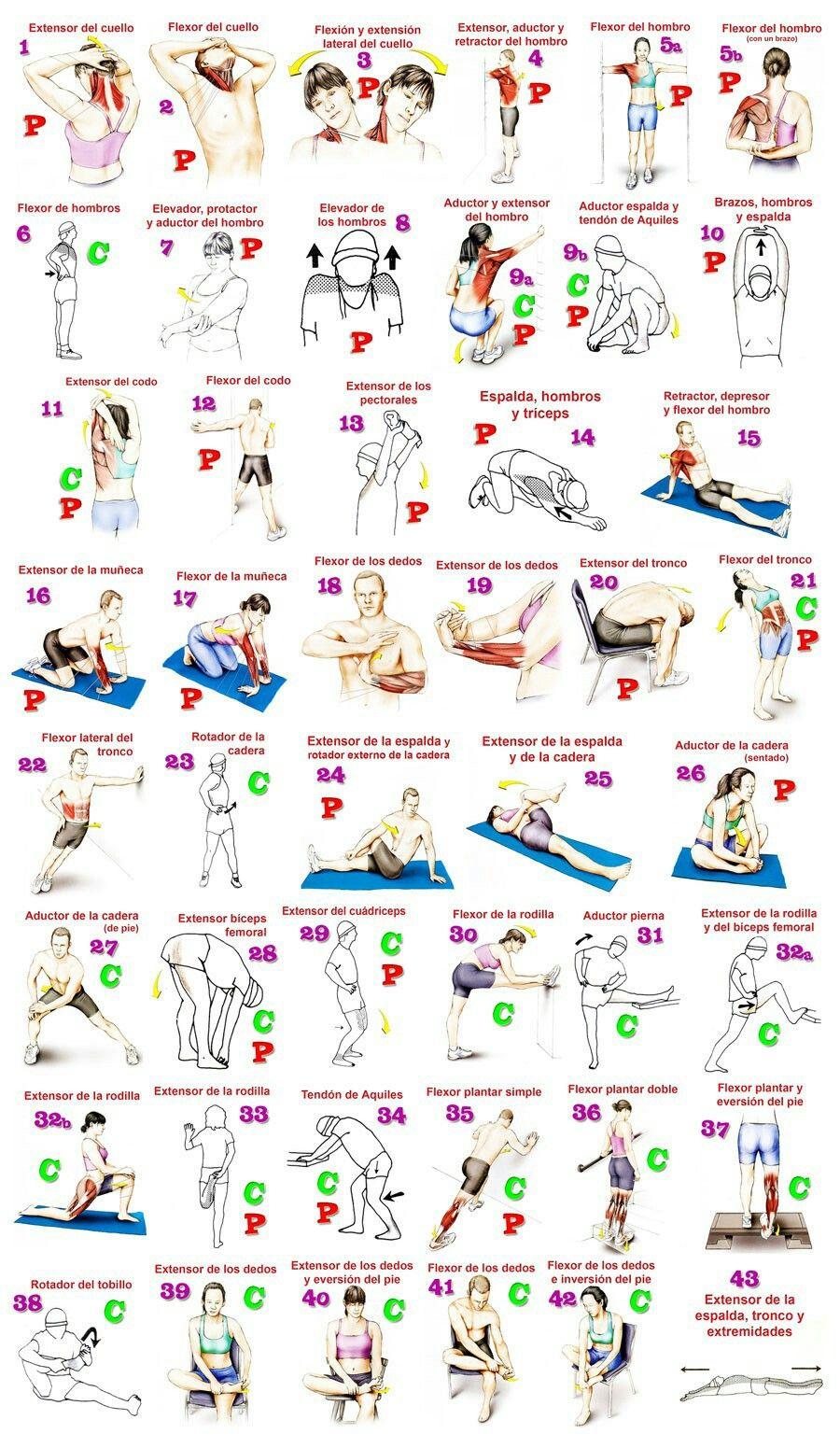 Estiramientos y anatomía funcional | Deportes | Pinterest | Anatomia ...