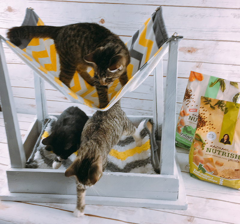Super Simple Cute Diy Cat Hammock Ideas For The House Pinterest