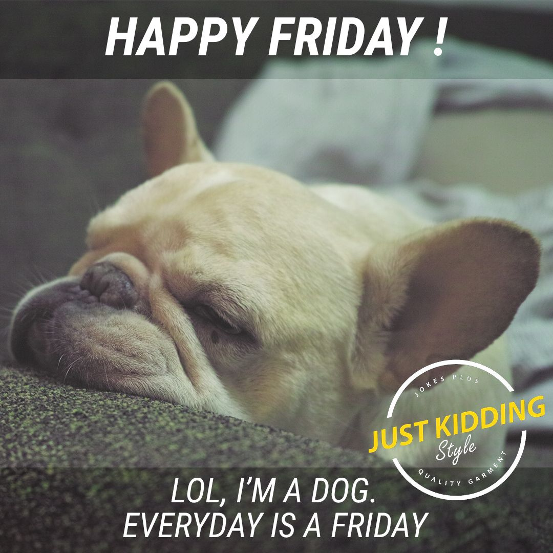 Happy Friday Lol I M A Dog Everyday Is A Friday Funny Dog Memes Funny Dog Videos Funny Dog Vid Funny Dog Memes Dog Memes Clean Happy Friday