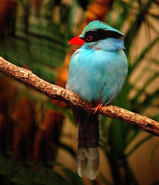 Best 25+ Tropical birds ideas on Pinterest | Beautiful birds, Birds and Exotic birds