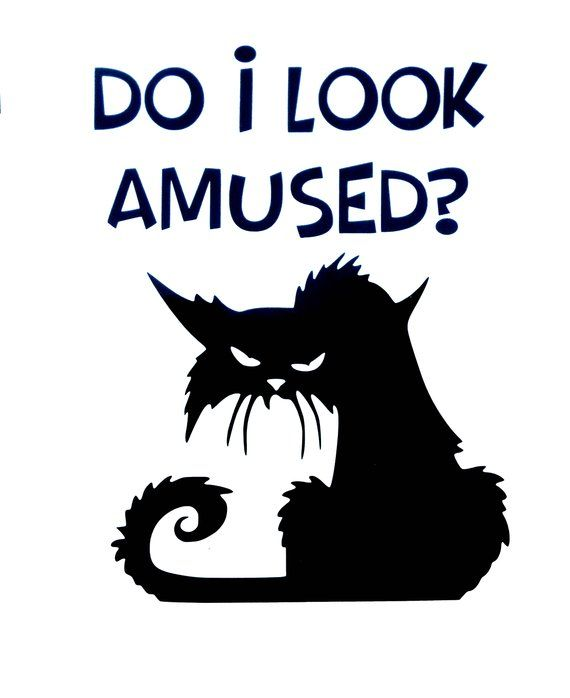 Do I Look Amused Wet Cat Car window sticker Decal Do I ...