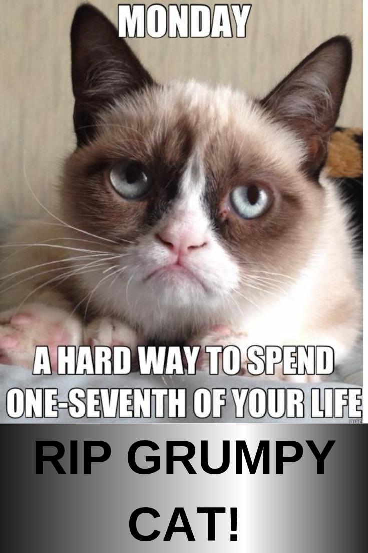 Grumpy Cat Memes  Monday in 2020 | Christmas cat memes, Grumpy cat