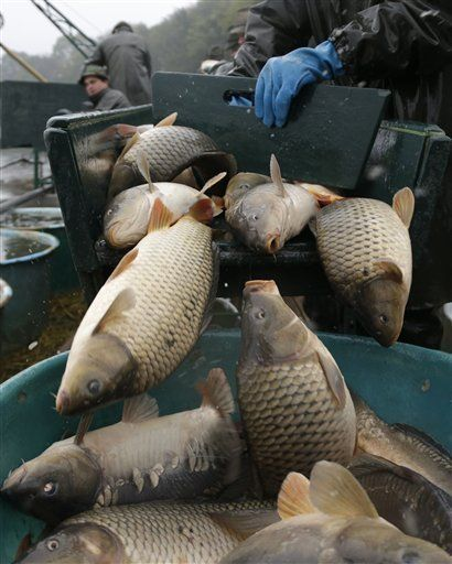 The Carp Is Always Fresh Brought In From The Trebon Ponds And