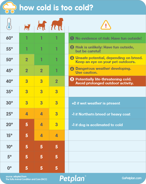 How Cold Is Too Cold For Your Dog Use This Chart From Petplan Pet Insurance To Find Out Dog Safe Dog Insurance Dog Safety