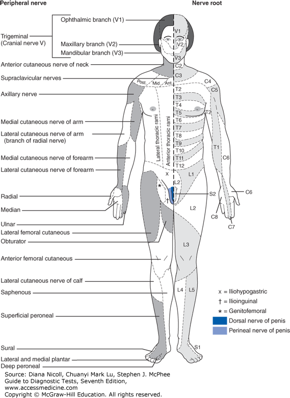Dermatome Chart Cutaneous Innervation The Segmental Or Radicular