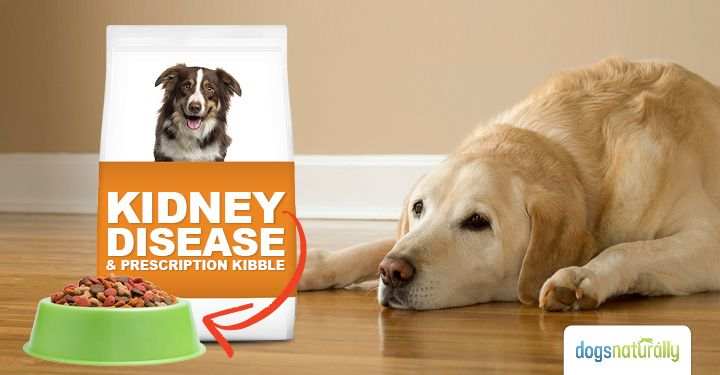 Kidney Disease And Prescription Kibble Dogs Naturally Pinterest