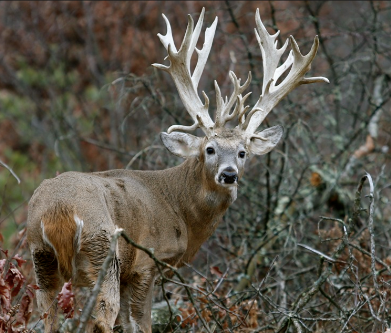 Pvc Projects For The Outdoorsman: Apple Creek Whitetails. @Josie Briggs Looks Like The