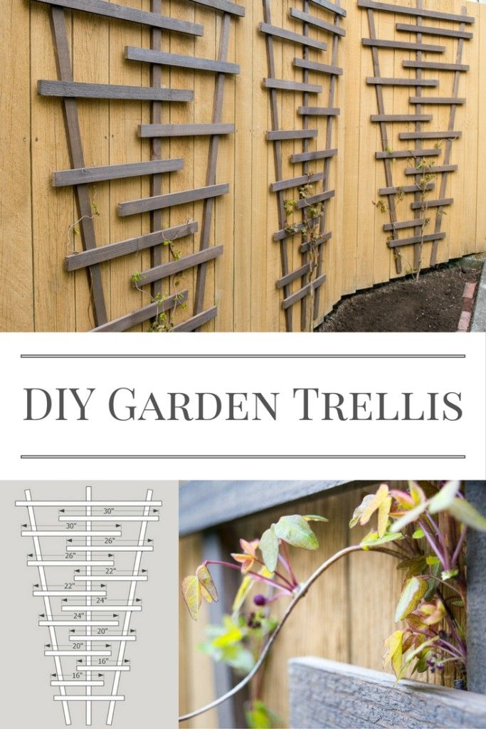 Build this garden trellis and watch your