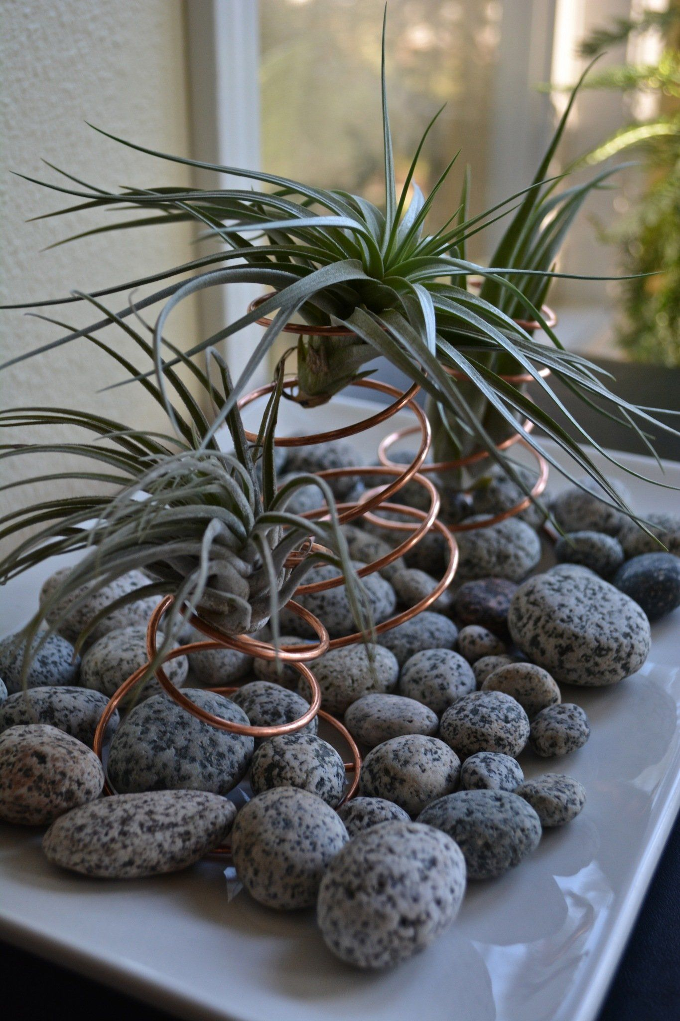 Photo of How to care for and display air plants in the home: The Pecks (photos)