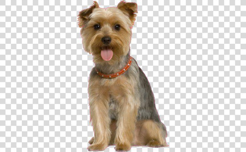 Dog Grooming Pet Sitting Dog Training Dog Png Free Download Dog Grooming Dog Training Dogs