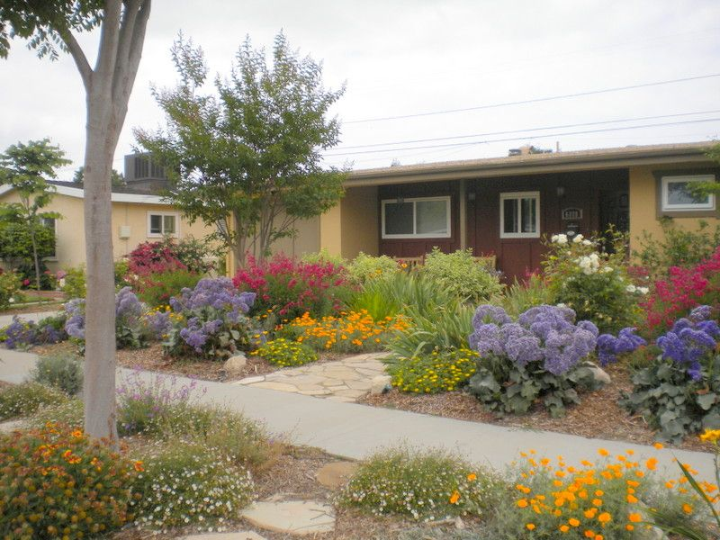 Long beach landscape designer colorful drought tolerant for Drought tolerant yard