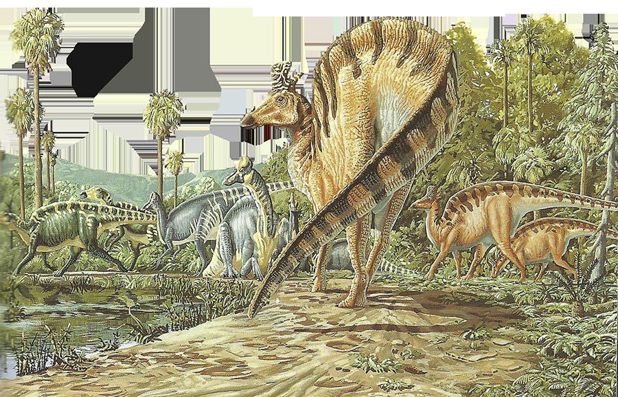 Troupeau de Sauropodes --- Site officiel : http://www.dinosauria.ca/