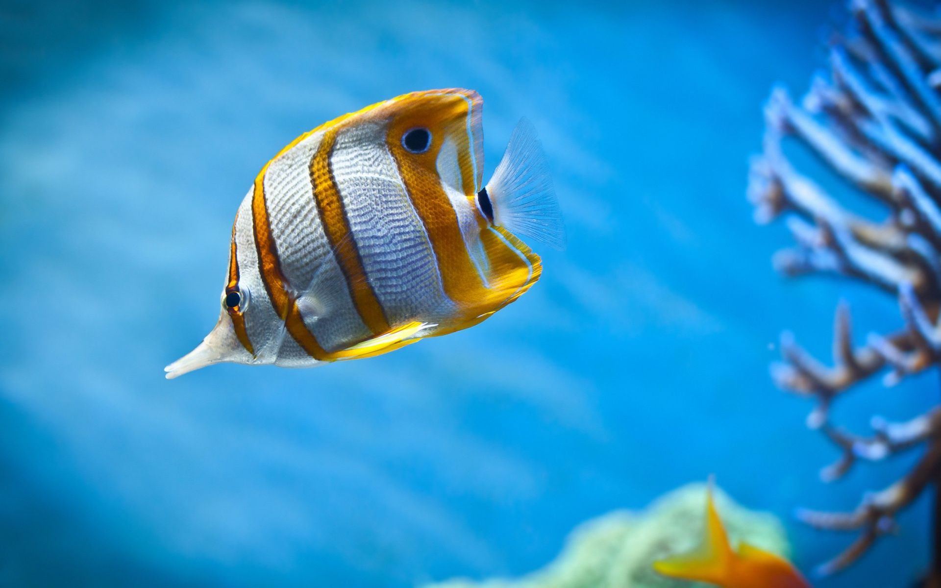 Fish Full HD Quality Images Desktop Live Wallpaper Free 512x512 Underwater CreaturesUnderwater