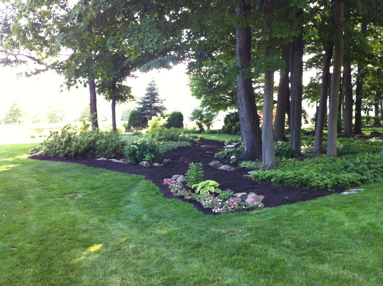 lanscape around trees backyard gardening and outdoors